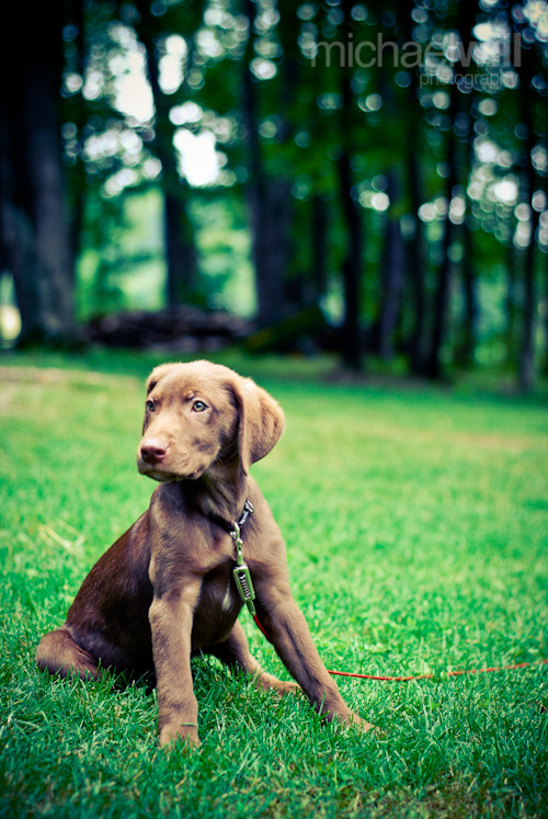 indiana the dog - michaelwill photography